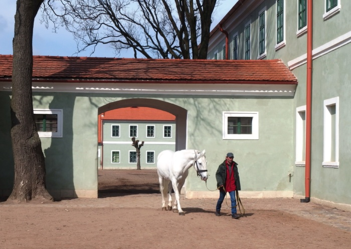 National Stud Farm in Kladruby makes UNESCO's World Heritage list - Czech Points