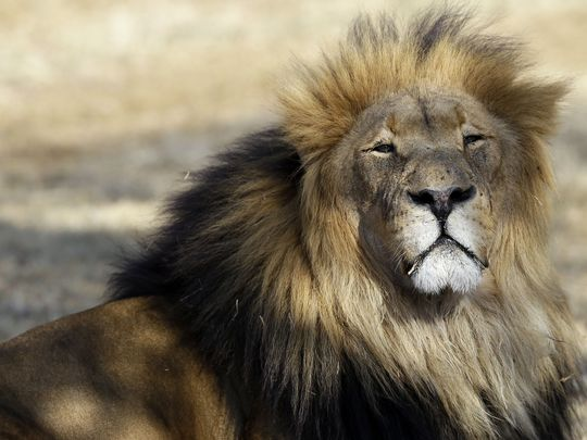 Man mauled to death by his pet lion - Czech Points