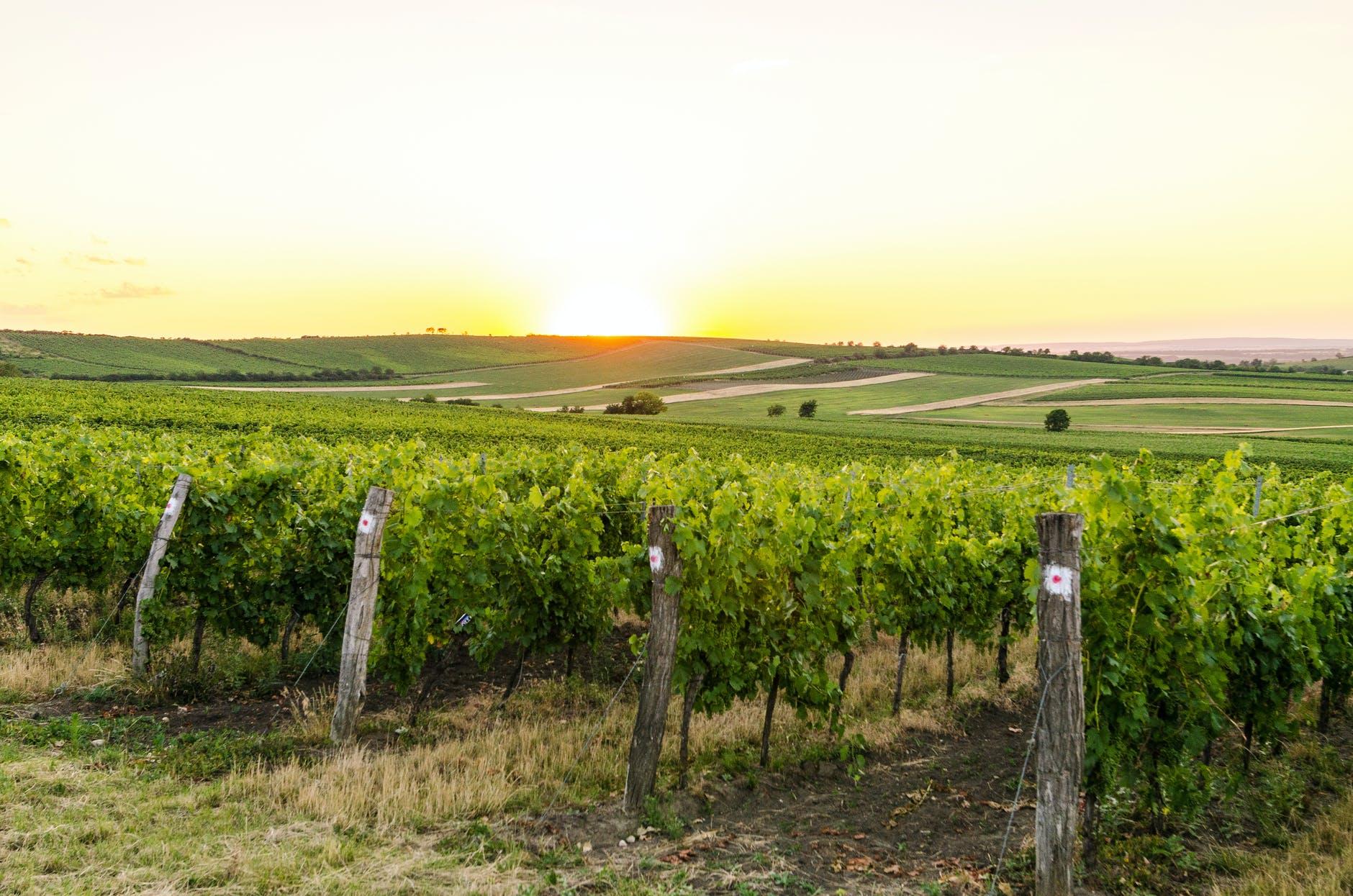 EU court backs champagne producers against Spanish 'champanillo' - Czech Points